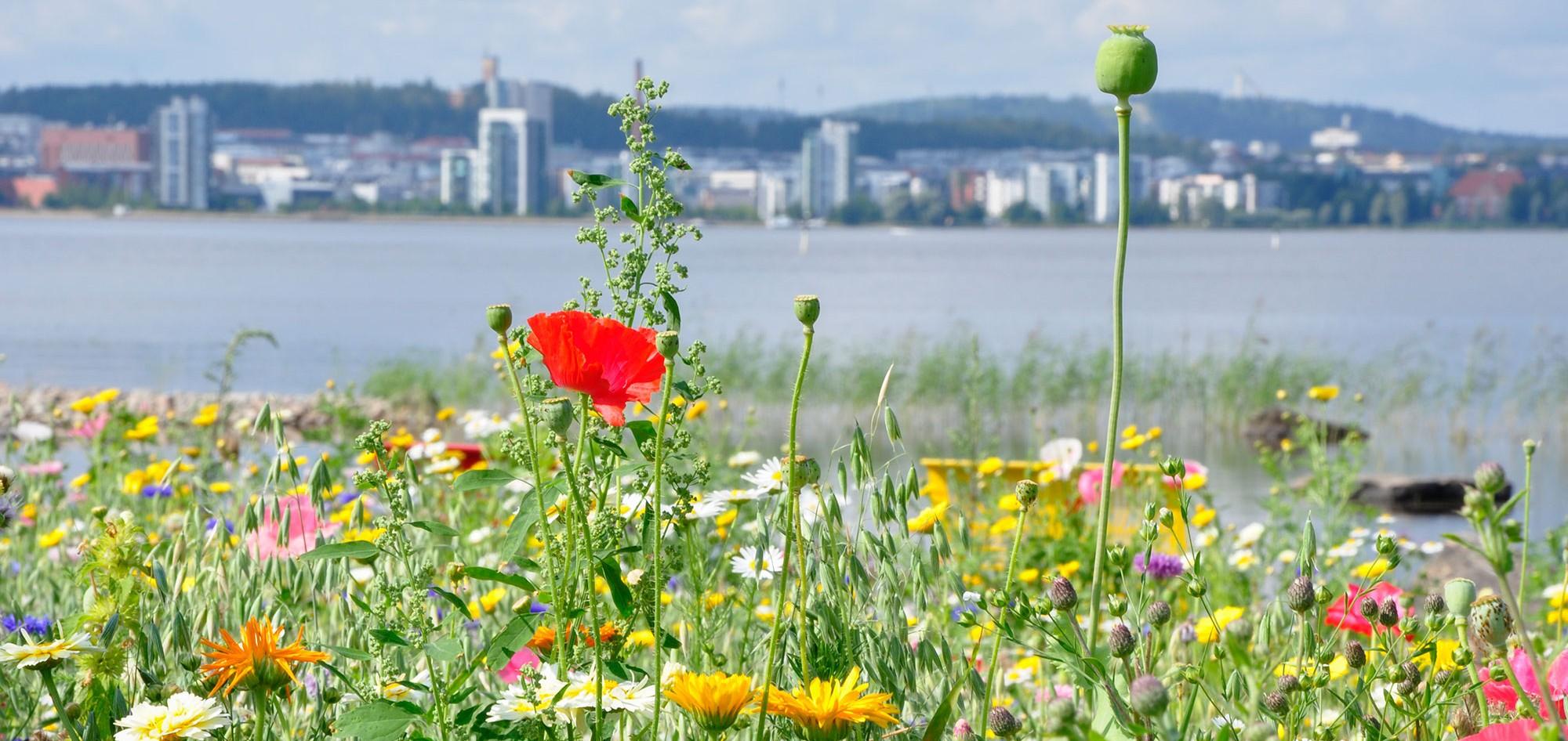 Maisema kukkaketoja kaupunki